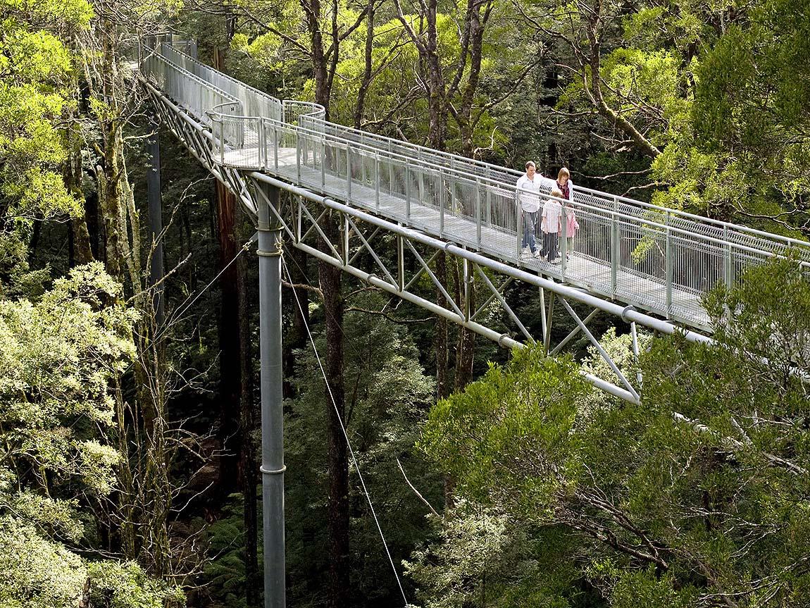 Otway Fly Treetop Adventures, Great Ocean Road, Victoria, Australia