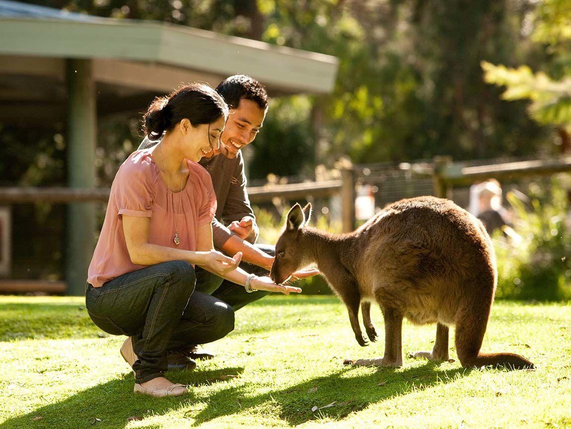 Healesville Sanctuary, Yarra Valley and Dandenong Ranges, Victoria, Australia
